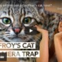 Geoffroy's cats caught on camera trap!