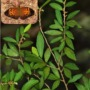 Plants thought to be extinct rediscovered in Sri Lanka!